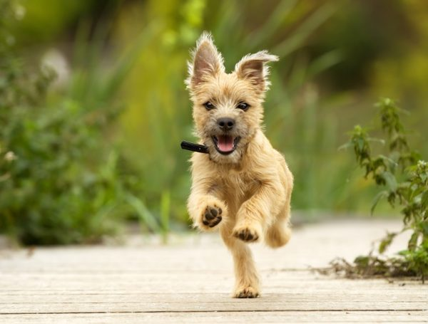 Your Dog's Knees, Part 2: Diagnosis and Treatment of Common Knee Conditions