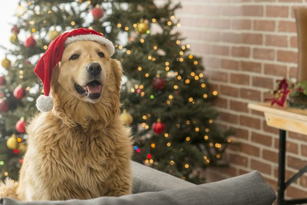 The 12 Days of Holiday Pet Emergencies
