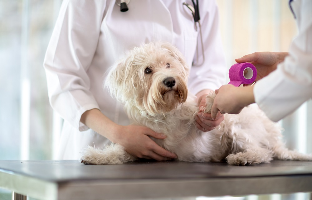 Surgery Recovery for Pets