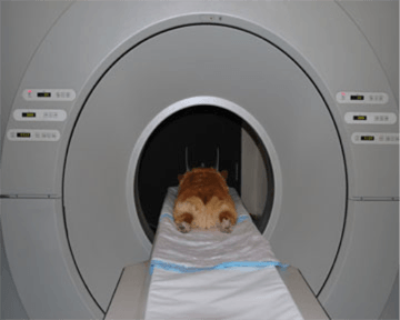 Figure 8. A canine patient in a CT scanner.
